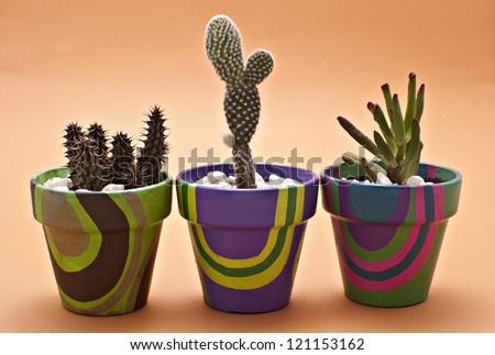 Cactus in pots - stock photo
