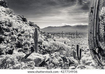 Cactus in the mountain - Cardon - Cafayate -  Salta Province - Argentine - stock photo