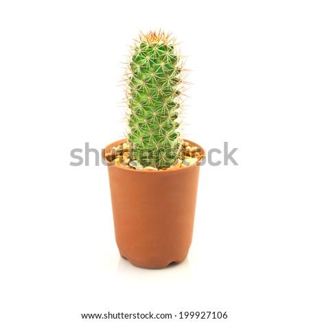Cactus Isolated On White Background - stock photo