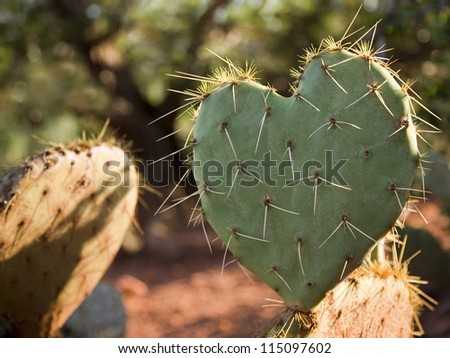 Cactus Leaf in the Shape of a Heart (rim lighting) - stock photo