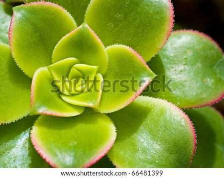 Cactus Macro with Vivid Texture and Color; Great for Desert Backgrounds - stock photo