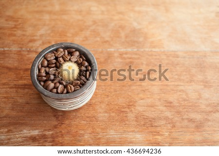 Cactus on coffee beans