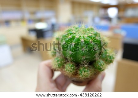 Cactus on hand in office - stock photo