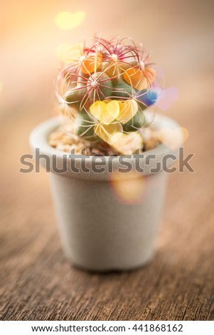 Cactus on the old wood background,selective focus,Studio Shot - stock photo