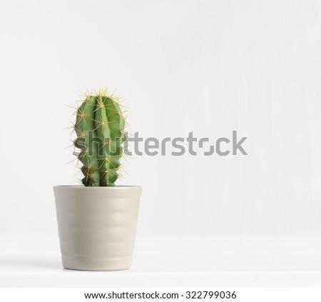 cactus on white - stock photo