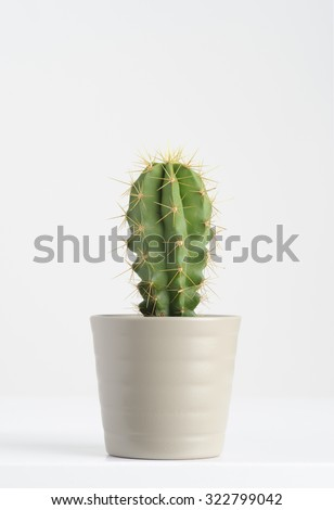 cactus on white - stock photo