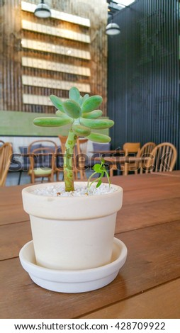 Cactus placed on a wooden table