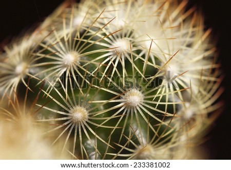 Cactus plant details - macro background - stock photo