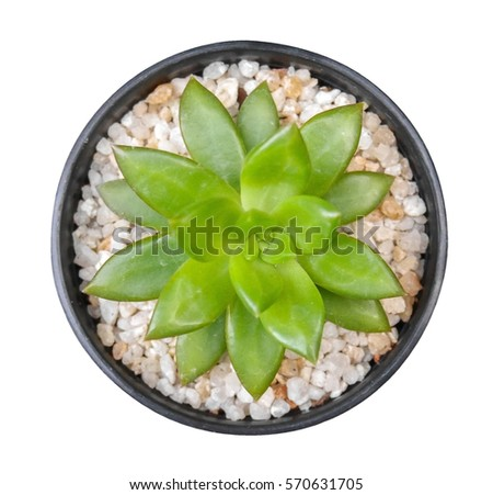 Cactus Plant In Clay Pot Top View Isolated On White Background Clipping Path Included