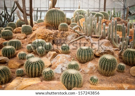 cactus plant in green house use for multipurpose
