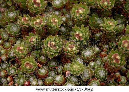Cactus plants - stock photo