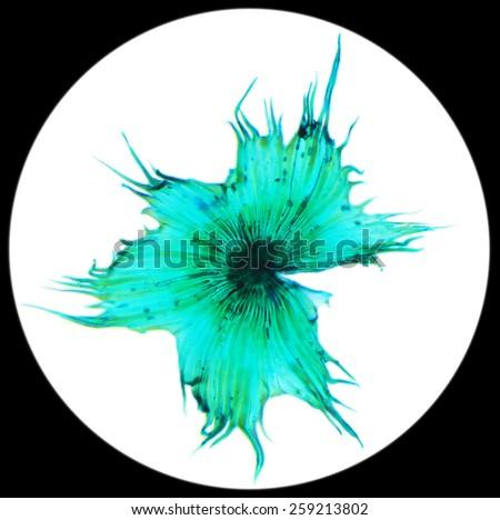 Cactus pollen under a microscope, (Stellato-Pilosus W.M.). 400x - stock photo