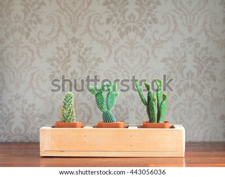 Cactus pots on the vintage wall on table side the windows. - stock photo
