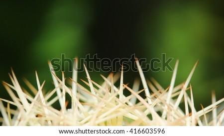 Cactus spine - stock photo