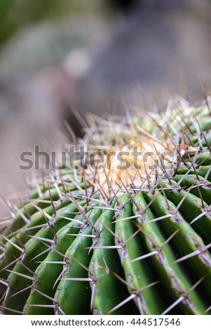 Cactus spines - stock photo