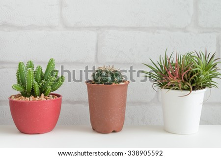 Cactus succulent and tillandsia on white table and white brick wallpaper background