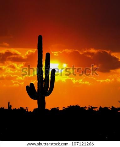 Cactus Tree during sunset - stock photo