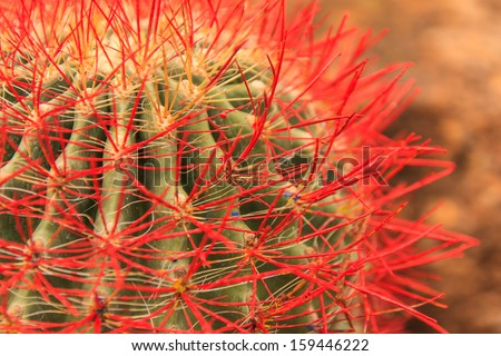 cactus with red thorns on blur background - stock photo