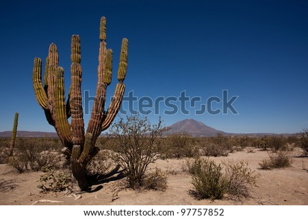 Cactuses and volcano in the desert of Baja California, Mexico - stock photo