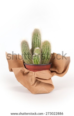 cactuses from terrace - stock photo