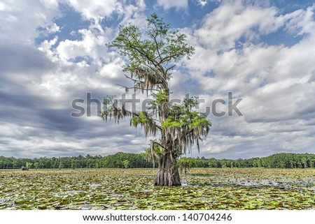 Caddo Lake, Nature