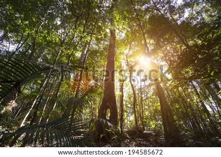 Cairns Rainforest - stock photo