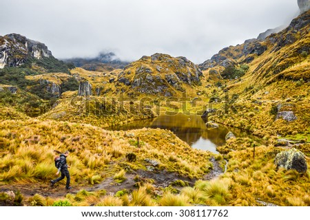 Cajas National Park in Ecuador, Cuenca district. Amazing landscapes of Andean highlands, valleys ,lakes, creeks,difficult trails covered with haze. Lonely hiker on the trail. Wet and slippery paths.  - stock photo