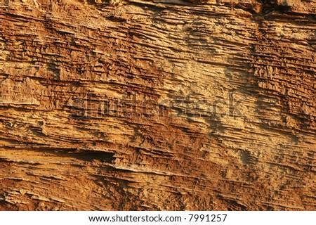 Calcareous texture - stock photo