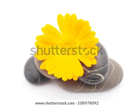 Calendula flower and pebbles on white background