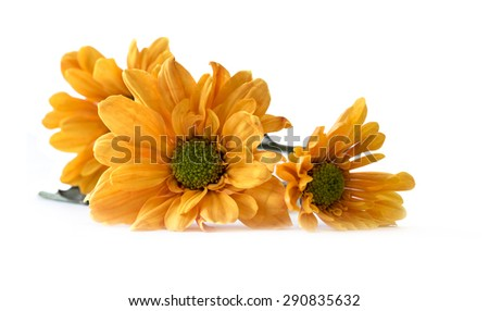 Calendula. Marigold flowers , isolated on white background