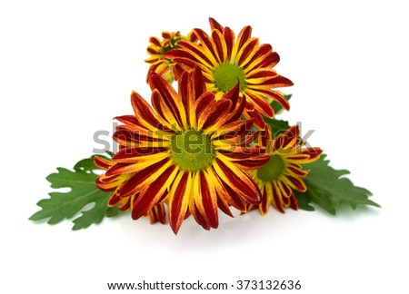 Calendula. Marigold flowers with leaves isolated on white - stock photo