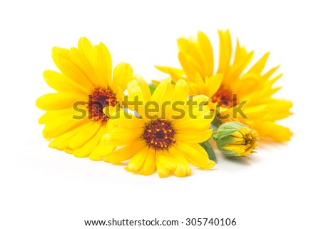 Calendula officinalis. Marigold flowers with leaves isolated on white - stock photo