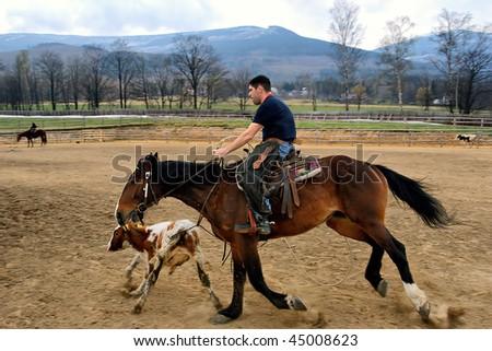 Calf roping - stock photo