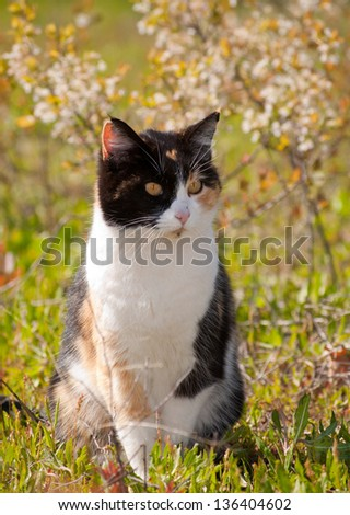 Calico cat in sun with spring flowers - stock photo