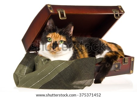 Calico cat lying in brown suitcase with green cloth on white background not isolated