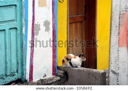 Calico Cat Resting in Mexico - stock photo