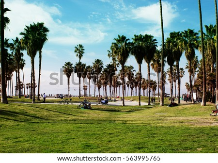 California Beach With Palm Trees