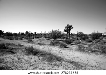 California Desert in Death Valley with Joshua Trees, Sage Brush, Dirt Roads, Sand Gravel, and other wild life that ekes out a life in the harsh dry desert sun.  - stock photo