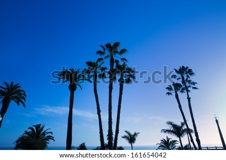 California high palm trees silhouette on blue sky USA - stock photo