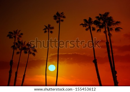 California high palm trees sunset sky silohuette background USA - stock photo