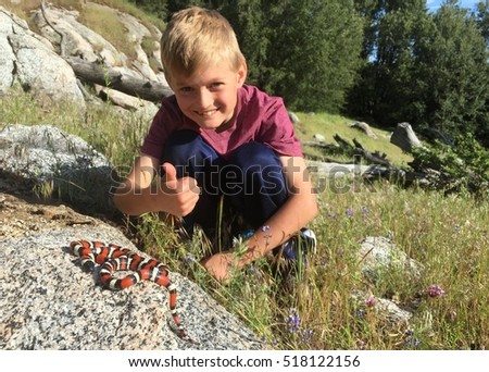 California Mountain Kingsnake, Lampropeltis zonata (multicincta), with boy in the background showing thumbs up - Focus centered on snake