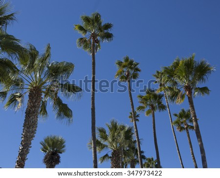 California Palm Trees in the Blue Sky