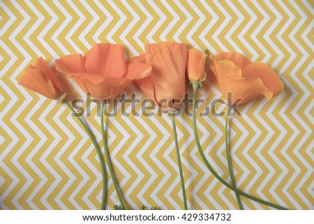 California poppies in a row on a yellow and white chevron surface - stock photo