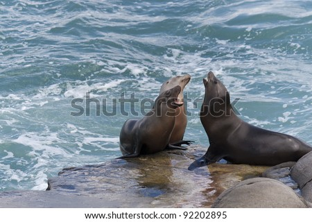 California Sea Lions on the rocks at La Jolla Cove, San Diego, California - stock photo