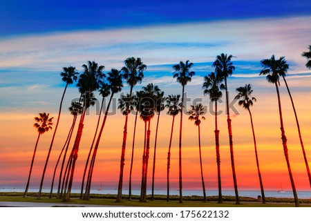 California sunset Palm tree rows in Santa Barbara US [photo illustration] - stock photo