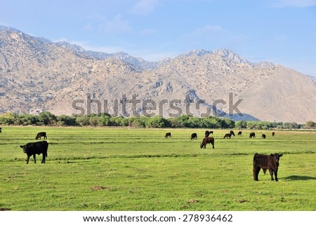 California, United States - cattle ranch with Scodie Mountains in the background (part of Sierra Nevada). Kern County. - stock photo