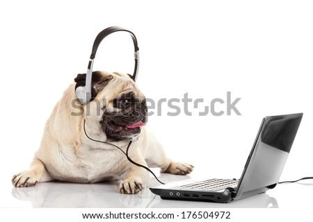 call center agent. pug dog telephone operator - stock photo