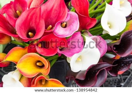Calla lily flowers in full bloom on display at the farmers market - stock photo