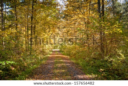 Calm path in the autumn forest - stock photo