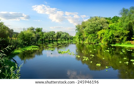 Calm river and green forest in sunny day - stock photo